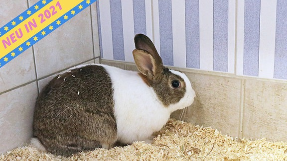 Ein Kaninchen mit großen Ohren. Und flauschig. Super flauschig. Holy moly.