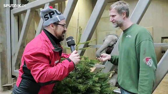 SPUTNIKer Lars verfüttert seinen Weihnachtsbaum im Bergzoo Halle an Elefanten.